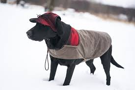 The SK Waxed Cotton Dog Jacket
