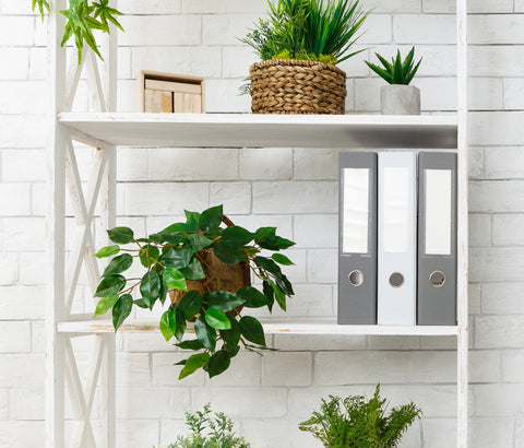 White open shelves with greenery and files on them