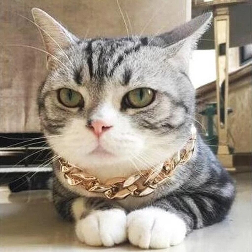 Cuban Gold Pet Necklace