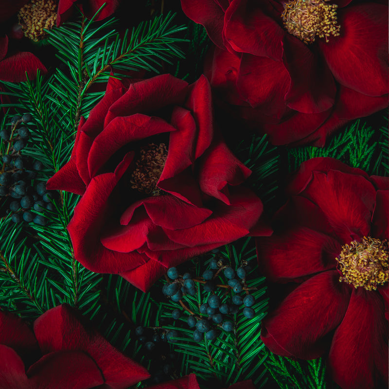 Holiday Collection of Floral Art Cards