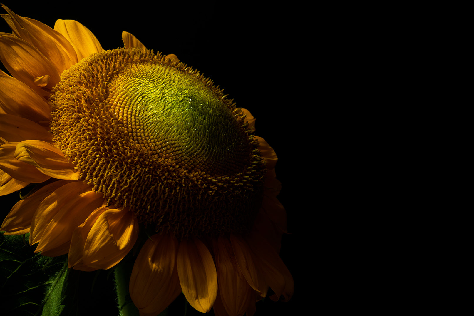 Sunflower Pantone Color of the Year