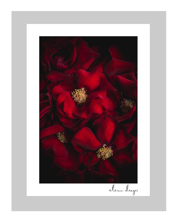 A Rose Affair | custom floral art cards | art postcards | ELENA DRAGOI