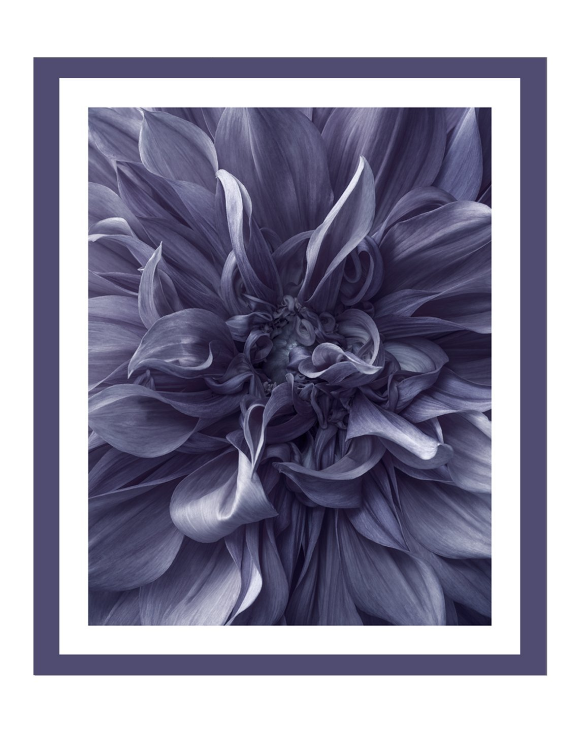 Dahlia I | Flower Art Prints | Elena Dragoi