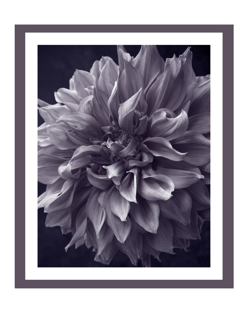 Dahlia II | Flower Art Prints | Elena Dragoi