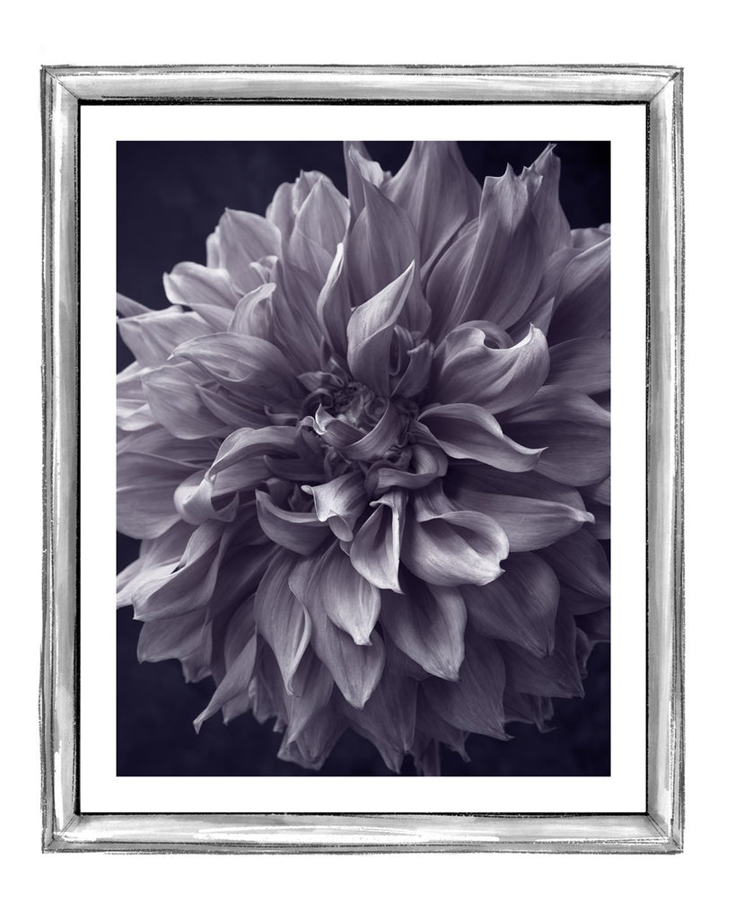 Dahlia II | Fine Art Flower Prints | Elena Dragoi
