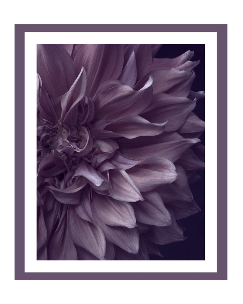 Dahlia III Flower Art Prints | Elena Dragoi