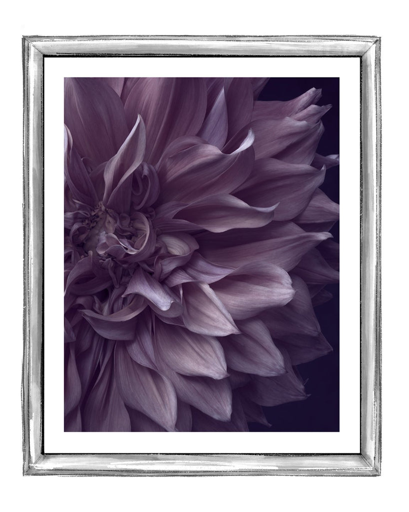 Dahlia III Fine Art Flower Prints | Elena Dragoi