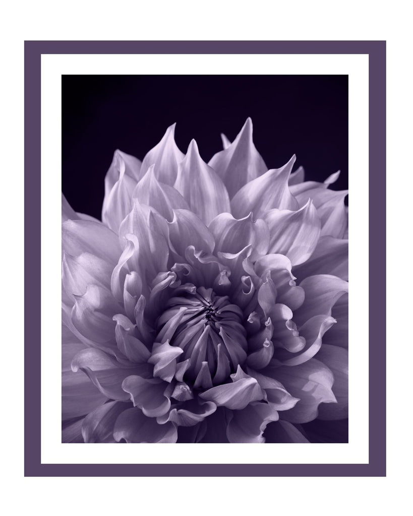 Dahlia IV Fine Art Flower Prints | Elena Dragoi