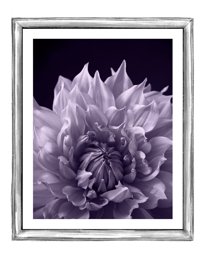 Dahlia IV | Fine Art Flower Photography | Elena Dragoi