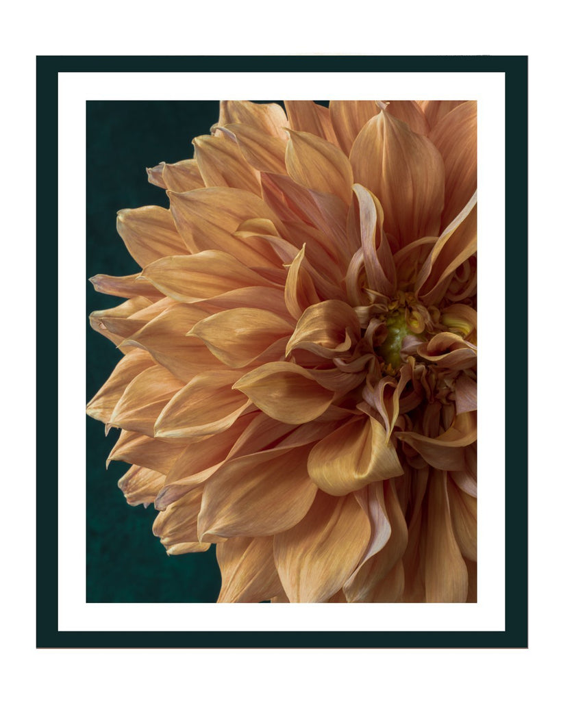 Dahlia IX Flower Prints