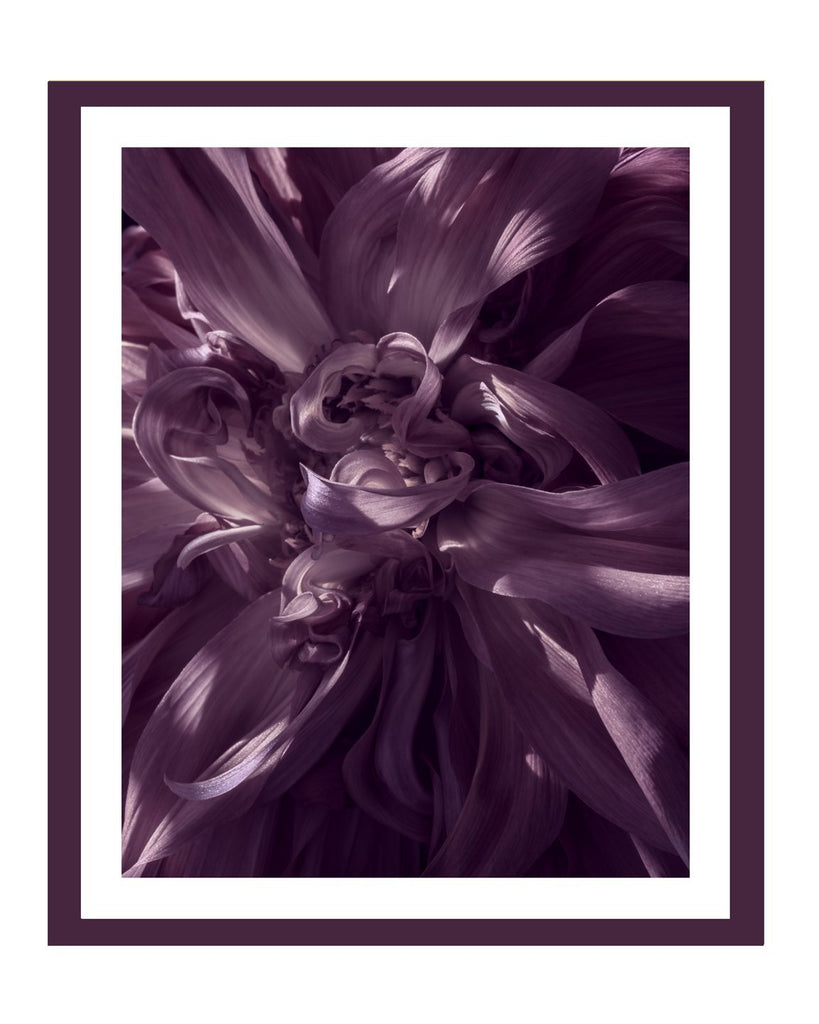 Dahlia V | Flower Art Prints | Elena Dragoi