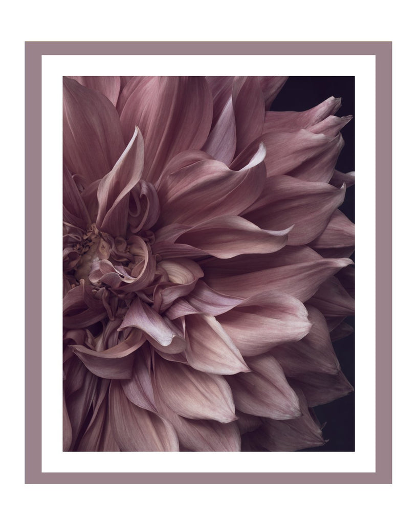 Dahlia VII | Flower Art Prints | Elena Dragoi