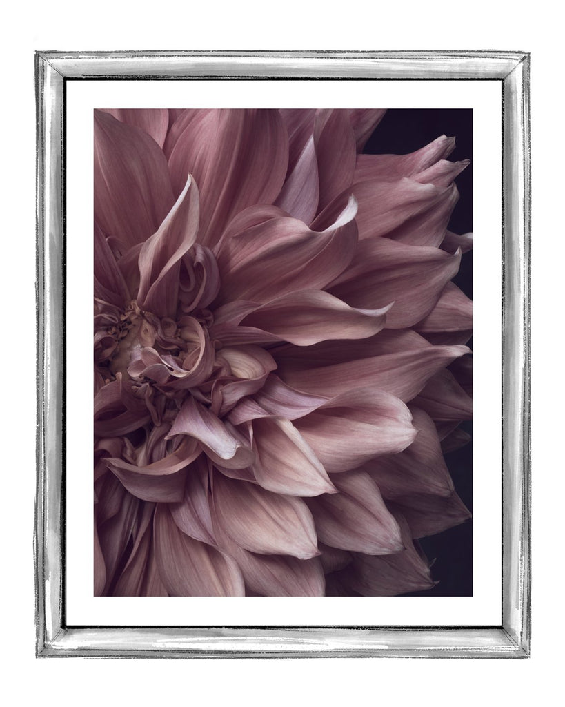 Dahlia VII | Fine Art Flower Prints | Elena Dragoi