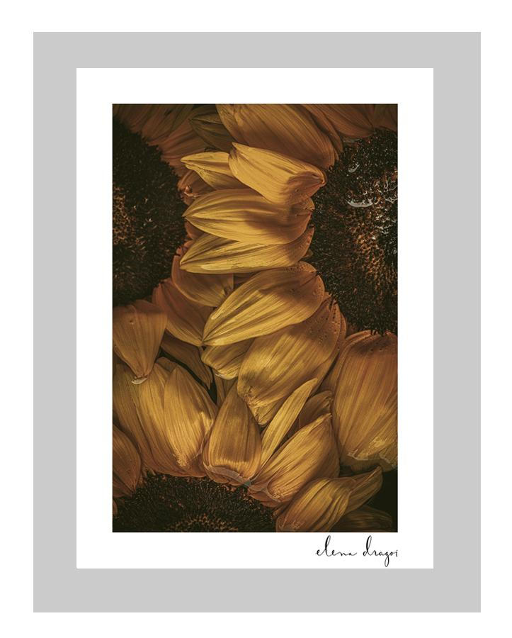 Golden Hour II custom floral art cards | art postcards | ELENA DRAGOI