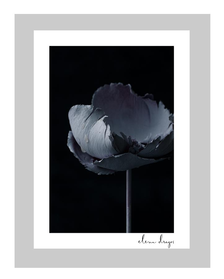 Serenity floral art cards | flower art cards | fine art flower photography | ELENA DRAGOI