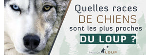 Races chiens proches loup Passion Loup