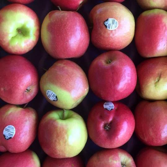 Brakely Farms Apples