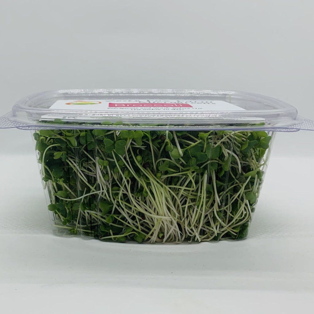 Zesty Fox Broccoli Microgreens