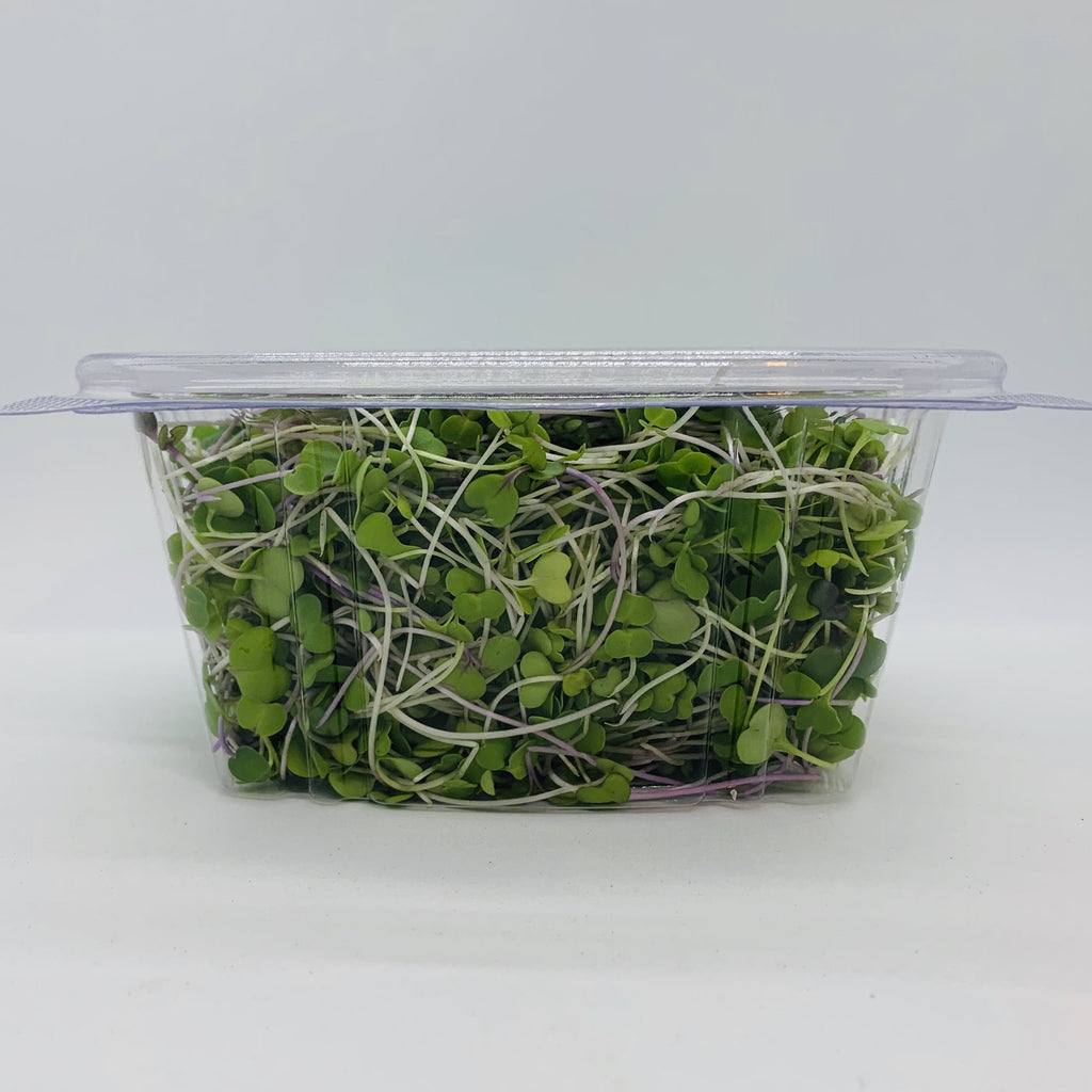 Zesty Fox Spring Mix Microgreens