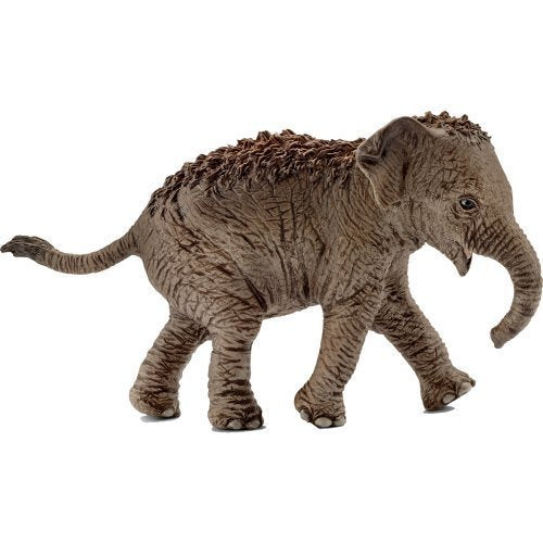 Schleich 14755 Asian Elephant Calf at Little Sprout