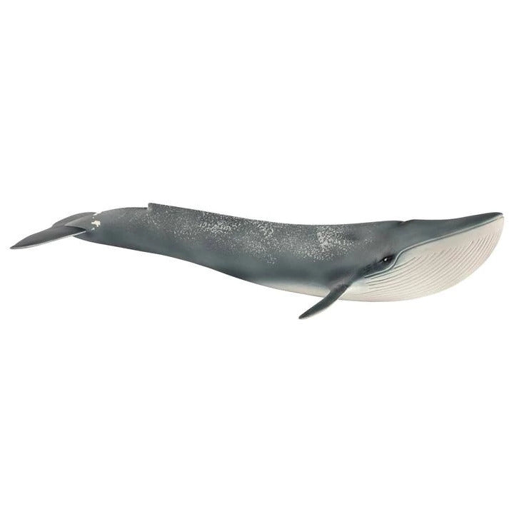 Schleich Blue Whale 14806 at Little Sprout