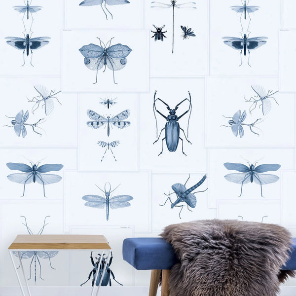 Entomology Blue Wallpaper