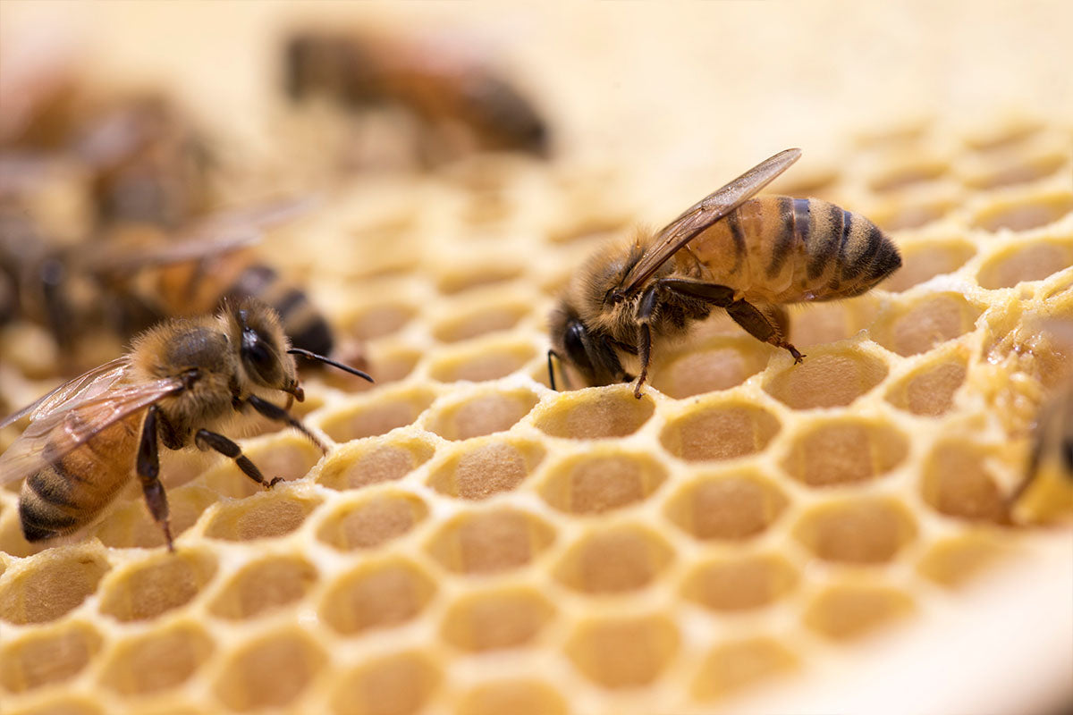 Hamilton's SummerGlow Apiaries To Attend UMF Association Science Symposium