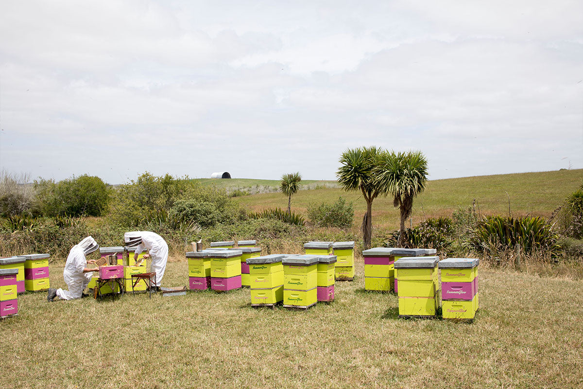 New Scientific discovery to correctly identify genuine Manuka Honey backed by Waikato based SummerGlow Apiaries.