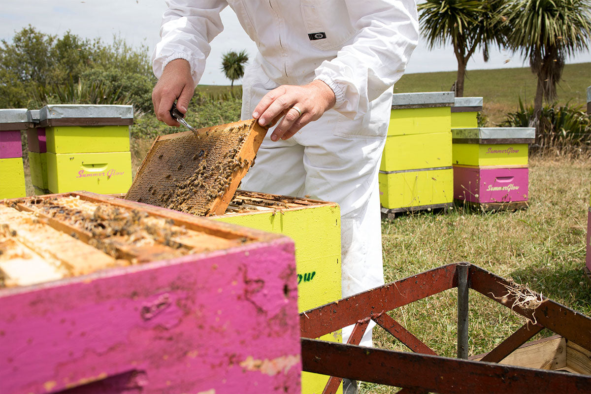 Summer Glow's great hope for Manuka Honey Industry