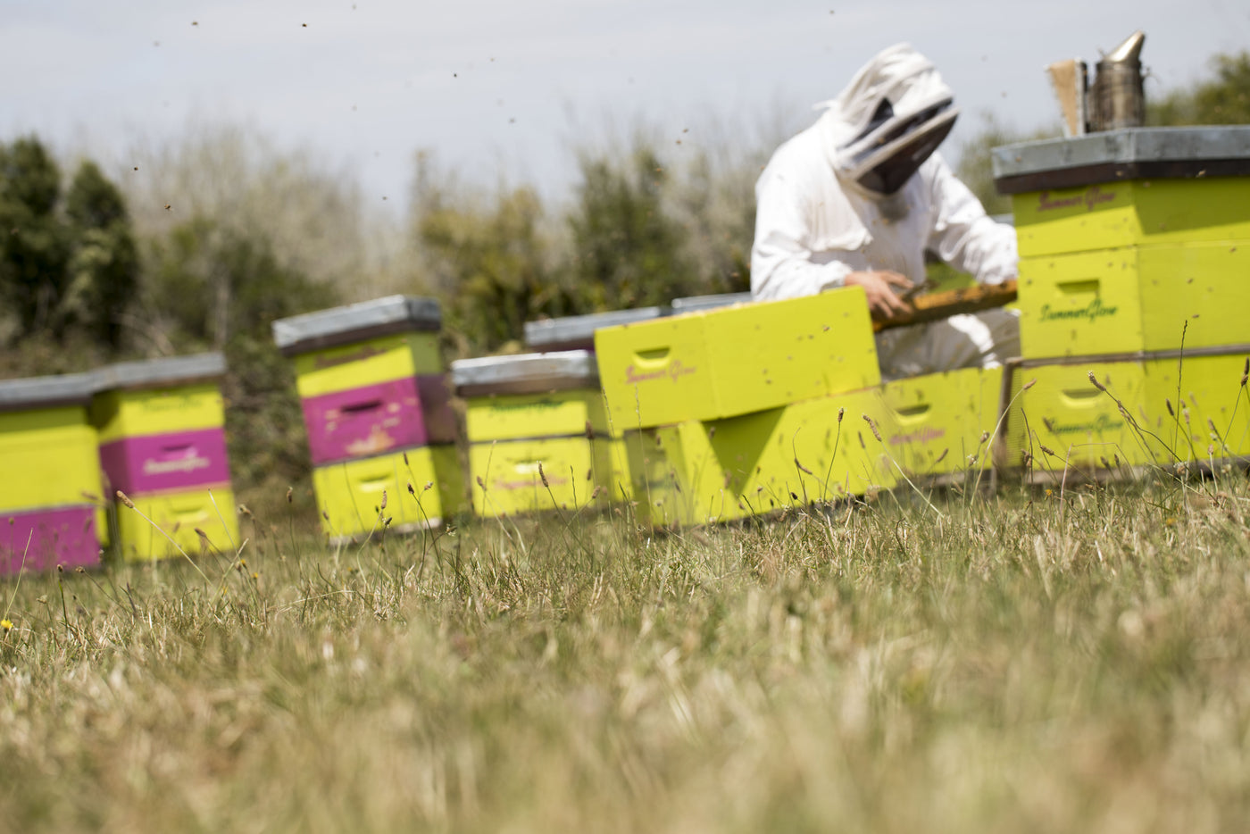 The Future Looks Bright for Waikato based SummerGlow Apiaries