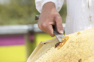 Get pure Mānuka Honey from Waikato based SummerGlow Apiaries