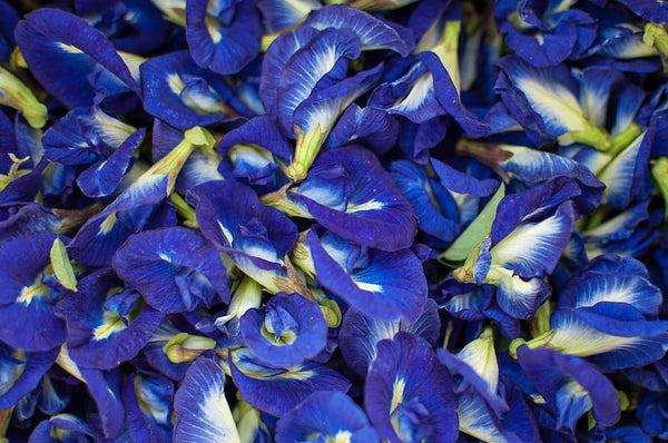 Understanding the benefits of Butterfly Pea Flower