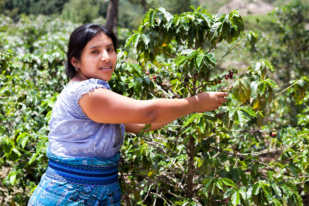 Ethically & Sustainably Sourced Coffees