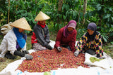 Indonesia coffee beans Kaphibeans