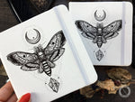 Sketchbook - Sketchbook -  Death Head Moth