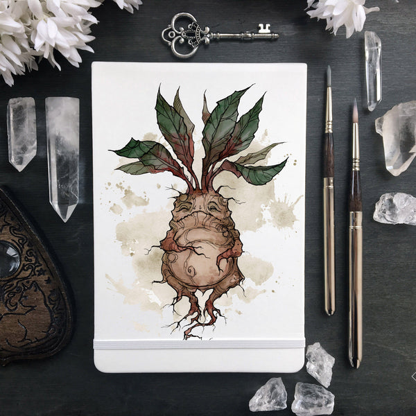 Sketchbook - Sketchbook - Mandrake