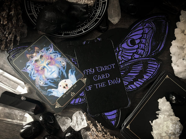 Tarot Board Card of the Day - VIOLET DEATH'S HEAD MOTH