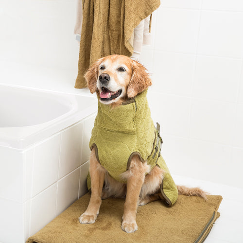 Retriever drying in a coat after a bath