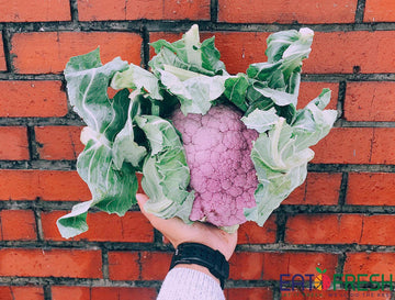 Cauliflower (Purple/Yellow) - 1 pc (1kg - 1.5kg)