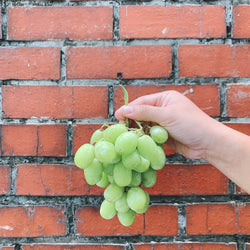 Grapes Sugar Crunch (Green Seedless Grapes) - 800g