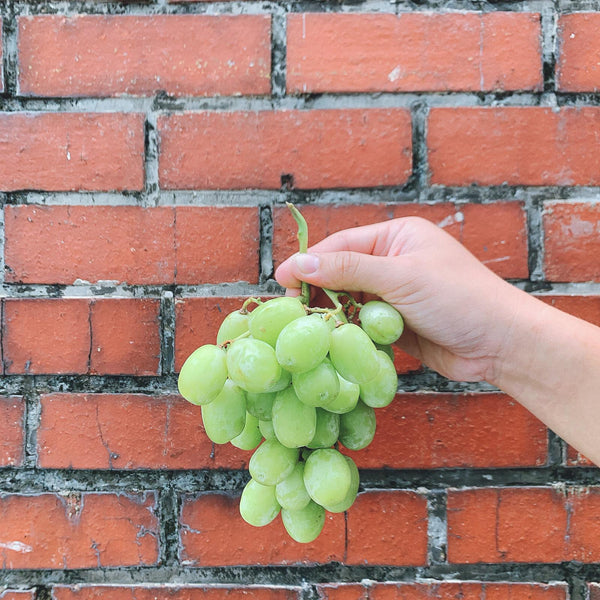 Grapes Sugar Crunch (Green Seedless Grapes) - 800g - Eat Fresh SG