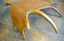 Load image into Gallery viewer, CUSTOM Painting on Real Moose Antler - Weathered Look - Woods Imagery