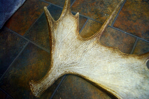 CUSTOM Painting on Real Moose Antler - Weathered Look - Woods Imagery