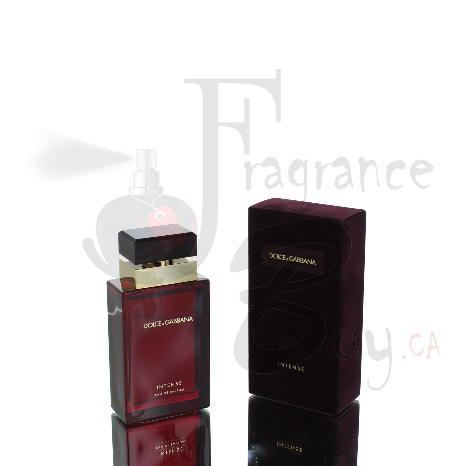 Intense by Dolce & Gabbana Femme For Woman
