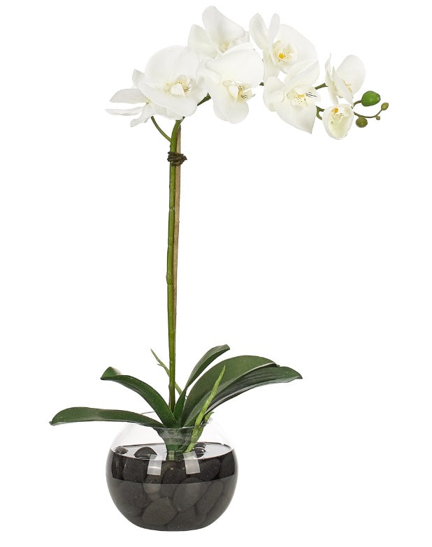 Orchid Phalaenopsis, White, Glass Bubble 24""