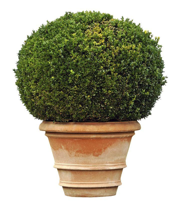Evergreens For Containers