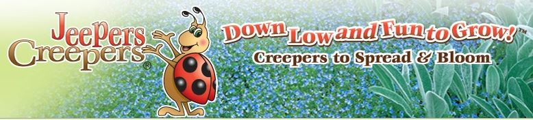 Jeepers Creepers® Groundcovers