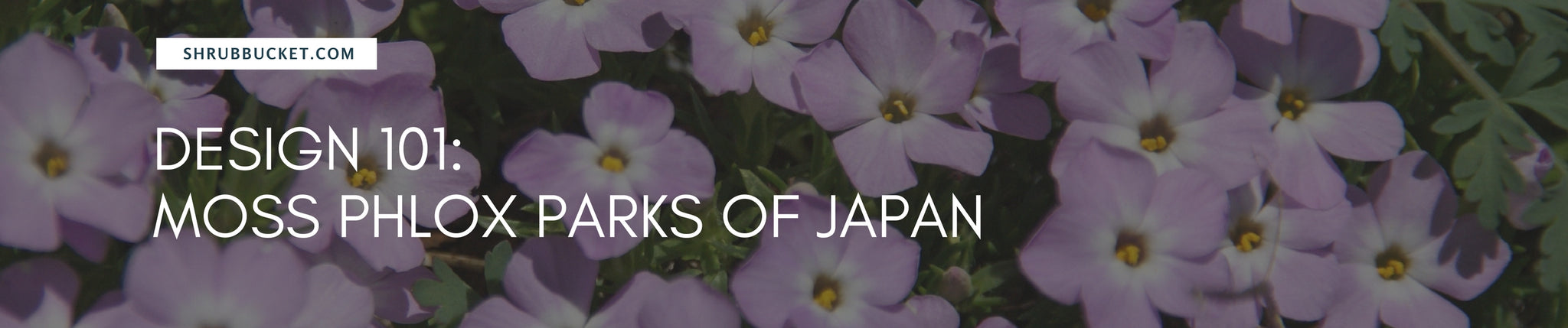 The Jaw Dropping Moss Phlox Parks of Japan