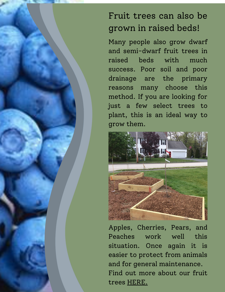 growing small fruits in raised beds