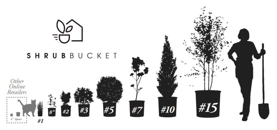 Plant Size Guide